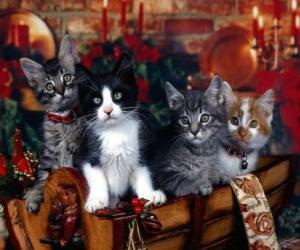 puzzel Schattige kittens op eerste kerstdag