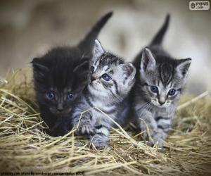 puzzel Schattige kittens