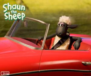 puzzel Shaun autorijden