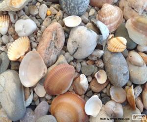 puzzel Shells en de stenen zee