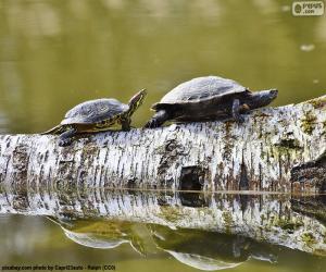 puzzel Sierschildpad