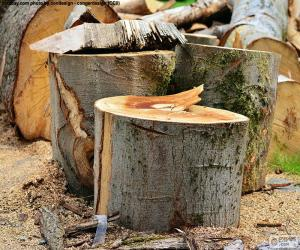 puzzel Snijden van boom