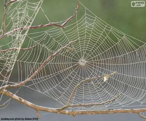 puzzel Spinnenweb