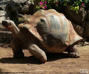 puzzel Sporenschildpad