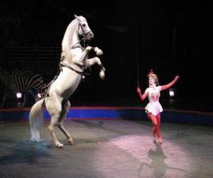 puzzel Tamer van paarden