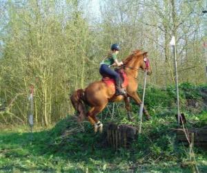 puzzel Technical Course Paardensport Mededinging, test de verstandhouding tussen paard en ruiter door middel van verschillende tests.