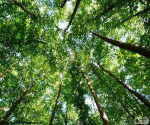 puzzel Toppen van de bomen