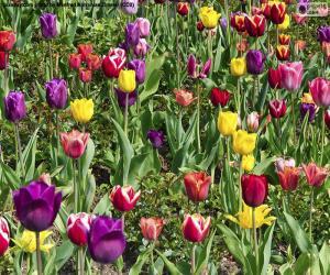 puzzel Tulpen