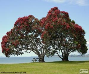 puzzel Twee bomen