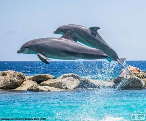 puzzel Twee dolfijnen springen