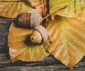puzzel Twee eikels en de herfstbladeren