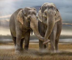 puzzel Twee grote olifanten met elkaar verweven stammen