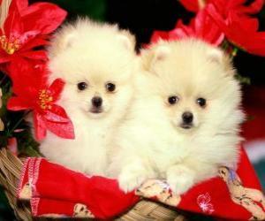 puzzel twee honden naast een kerst planten