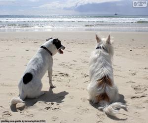puzzel Twee honden op het strand