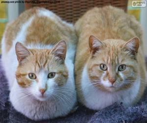 puzzel Twee katten