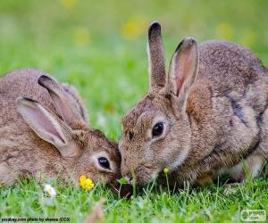 puzzel Twee konijnen eten