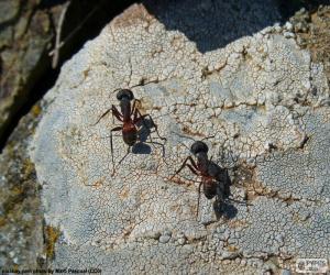 puzzel Twee mieren