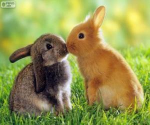 puzzel Twee mooie konijnen aangezicht tot aangezicht