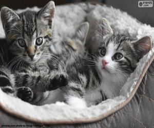 puzzel Twee schattige kittens