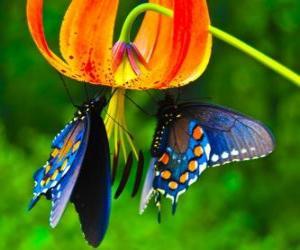 puzzel Twee vlinders op een bloem