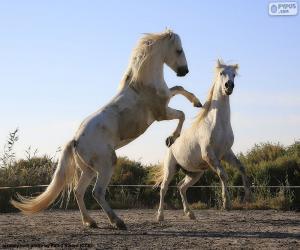 puzzel Twee witte paarden