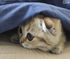 puzzel Verborgen kat