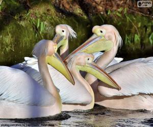 puzzel Vier roze pelikanen