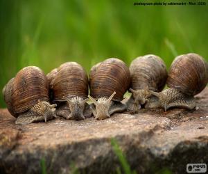 puzzel Vijf slakken