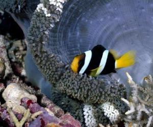 puzzel Vis in de bodem van de zee