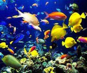 puzzel Vissen van verschillende soorten en maten