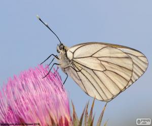 puzzel Vlinder aan roze bloem