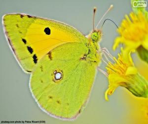 puzzel Vlinder kalk