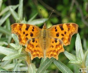 puzzel Vlinder vleugels open