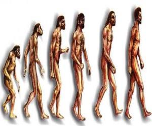 puzzel Volgorde van de menselijke evolutie van Australopithecus Lucy tot de moderne mens passeren onder andere door mannen van Heidelberg, Beijing, Neanderthalers en Cromagnon