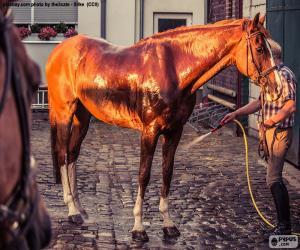 puzzel Wassen van een paard