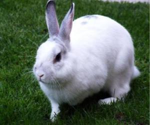 puzzel White Rabbit als de sneeuw