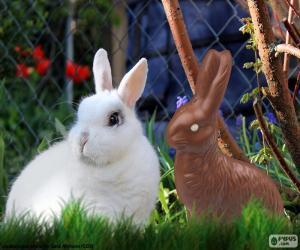 puzzel Wit konijn en de andere chocolade
