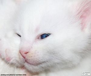 puzzel Witte kat gezicht