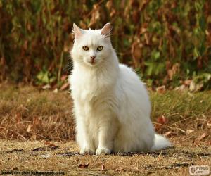 puzzel Witte kat zitten