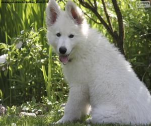 puzzel Witte Zwitserse Hond Puppy van de Herder