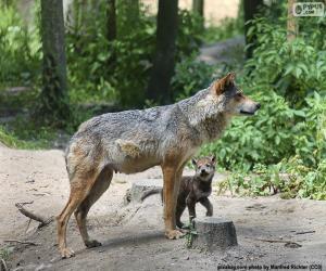 puzzel Wolf en het fokken