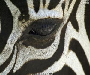 puzzel Zebra oog