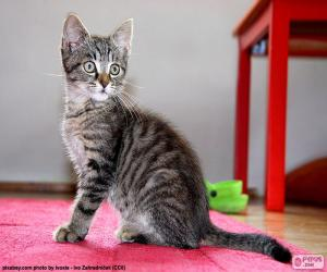 puzzel Zittend Kitten
