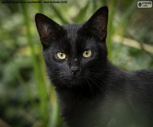 puzzel Zwart kattengezicht