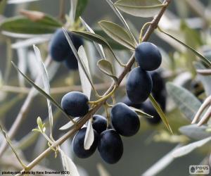 puzzel Zwarte olijftak