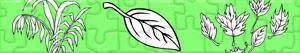 Puzzles de Planten en Bladeren